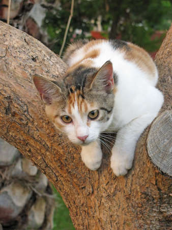 spotted fur: Spotted cat on a tree