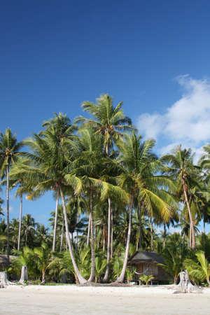 Beach hut under coconut palms Stock Photo - 7256862