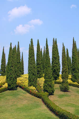 Cypress trees and flower beds in botanical garden photo