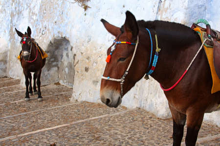 Donkeys at the Old Port, Santorini, Greece photo