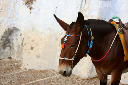 Donkey at the Old Port, Santorini, Greece photo