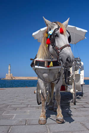 hitched: A white horse hitched to a carriage on the promenade in Chania, Crete, Greece