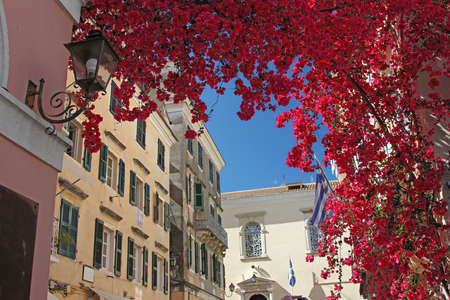 kerkyra: Colorful street in old town of Kerkyra with bright bougainvillea bloom above the passage  Corfu, Greece