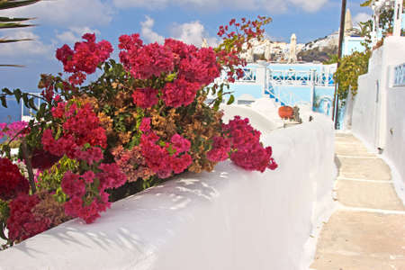 An alley  with bougainvillea flowers in Santorini, Greece photo