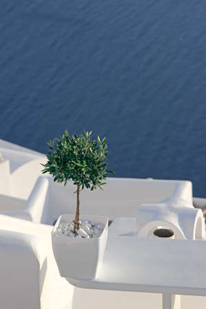 A small olive tree in a flower pot on the background of blue sea, Santorini, Greece photo