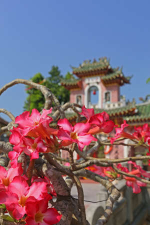 chinese garden: Pink flowers in a chinese garden Stock Photo