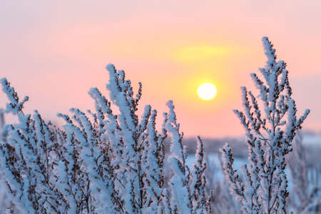 winter scenes: Beautiful sunset over prairies on a cold winter day Stock Photo