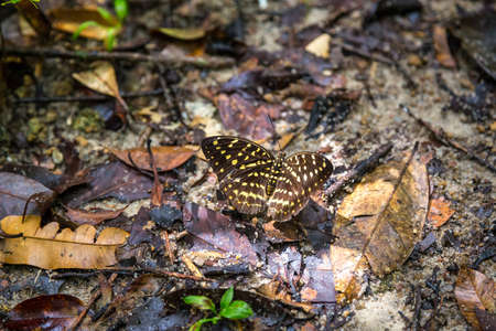 Butterfly in a tropical forest