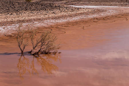 Dry plant in a puddle of water in a desert