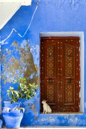 Cat sitting in front of decorated door of a traditional house in Tunisia