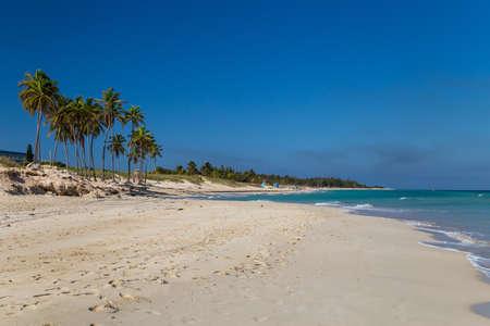 Palm trees on a paradise beach. Cuba, the Caribbean