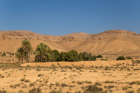 Oasis in a desert. South Tunisia