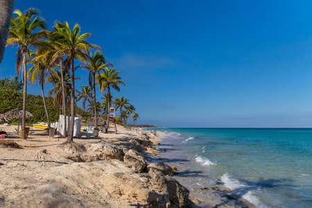 Palm trees on a rocky beach. Cuba, the Caribbean 免版税图像