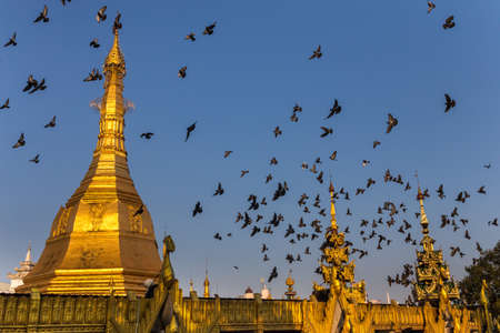 Gilded dome of a buddhist pagoda. Startled flock of pigeons flying around it. Yangon, Myanmar Фото со стока