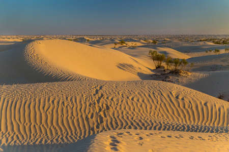 Dunes of Sahara desert at sunset, near Douz, Tunisia. Featuring wavy pattern created by wind