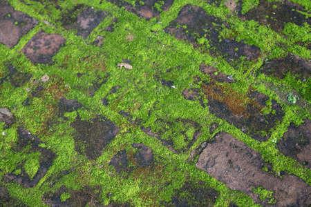 Green moss on paving stones. Full frame background