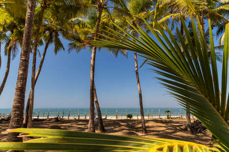 Palm trees on a beach. Goa, India