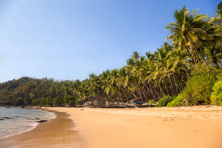 Tropical beach with a row of fishing boats and palm trees