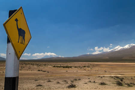 Road sign warning about vicunas passing and vicunas grazing in a mountain valley behind it
