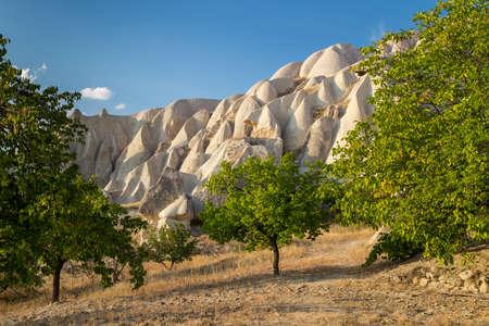 Orchard in a vally in Cappadocia, Turkey 免版税图像