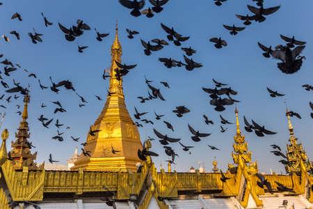 Gilded dome of a buddhist pagoda. Startled flock of pigeons flying around it. Yangon, Myanmar 免版税图像