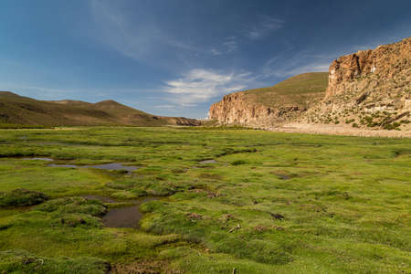 View to a flood-meadow in Bolivian Altiplano