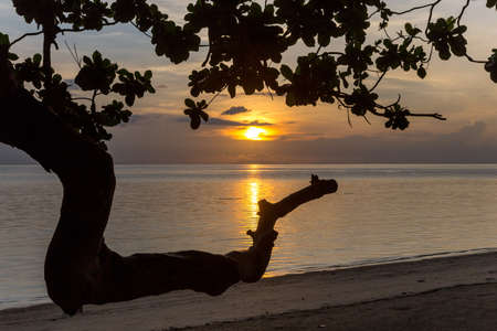 Sunset on a beach seen through tree branches
