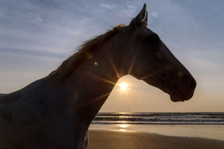 Silhouette of a horse on a beach at the sunset 免版税图像