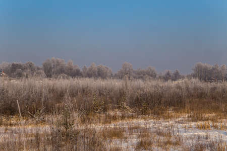 Winter landscape. Plants and trees covered with hoarfrost