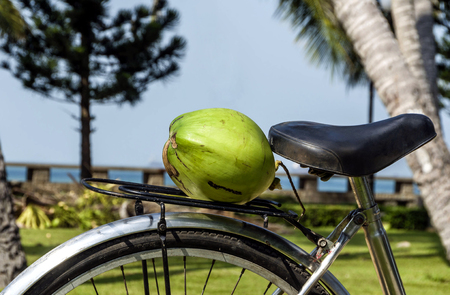 the carrier: Coconut on a bicycle luggage carrier