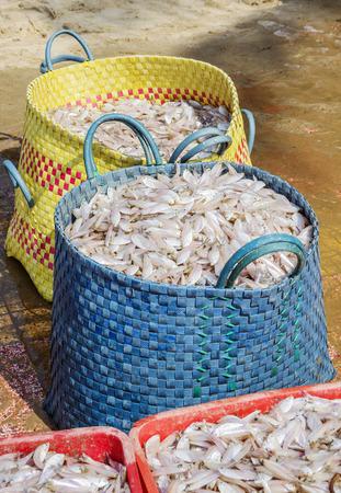 sorting: Sorting of small fish