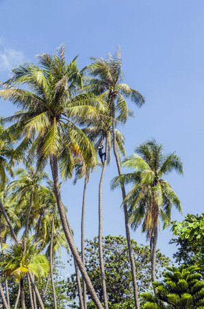crone: services collect a coconut