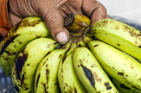 ethnology: Bananas in dirty hands