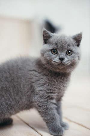 Cute gray kitten in wicker basket isolated on white