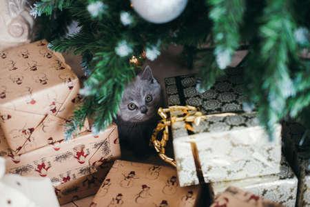 Sad kitten on a fi tree Stock Photo