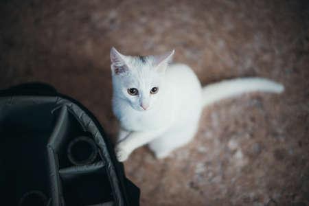 Cute white kitten in wicker basket isolated on white