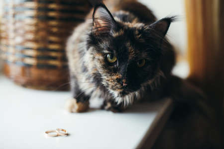tossing up wedding rings cat Stock Photo