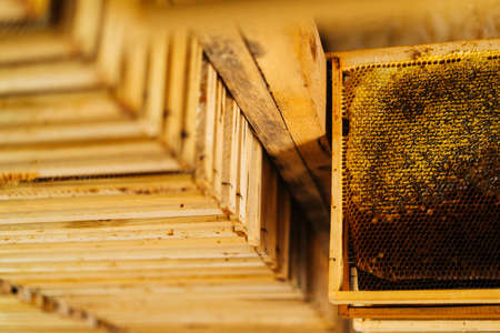 Close-up of wooden honeycomb frames hanging on a shelf in bee house. Sun rays gently illuminate shelves in beehouse. Archivio Fotografico