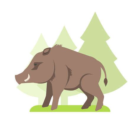 Wild boar flat vector illustration
