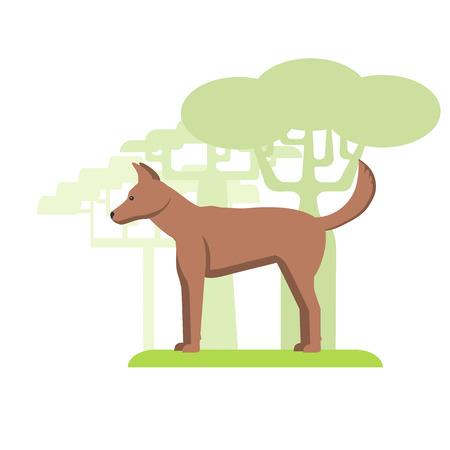 Dingo dog dwells in Australia, silhouette on white background, flat image Illustration