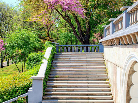 parapet: Marbel stairs and parapet in a park with green and purple blossoming trees Stock Photo