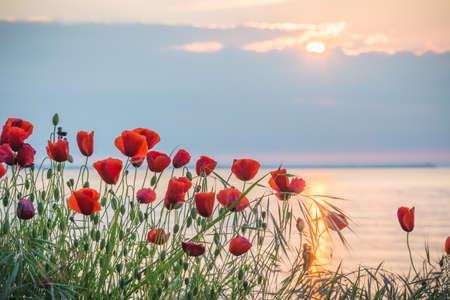 Mohnblumen am Ufer des Meeres bei Sonnenaufgang