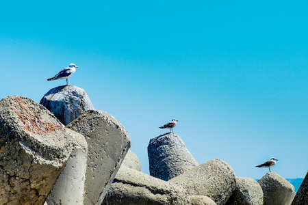 ascending: Three seagulls alighted ascending on a bay concrete tetrapods