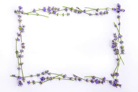 A frame of fresh lavender flowers on a white background. Lavender flowers mock up. Copy space. Stock Photo