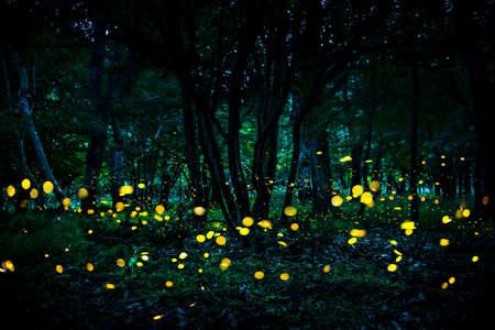 Glimwormen die in het bos bij schemering vliegen.