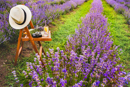 A chair with a hanged over hat, an open book, a retro camera and a bunch of lavender flowers between the blooming lavender rows under the summer sunset rays. Dream and relax concept. Standard-Bild