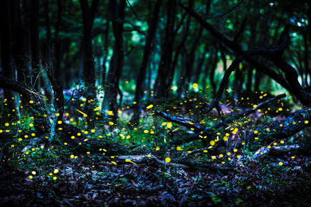 Frireflies flying in the forest at dusk. Stock Photo