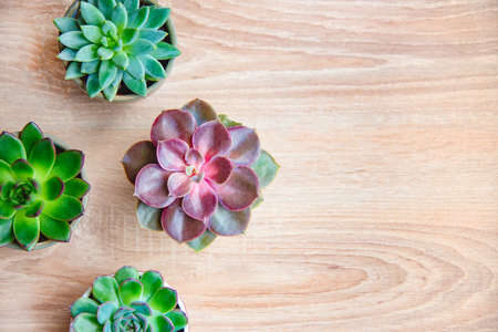 Top view of various succulent plants arranged over wooden backgtound. Flat lay. Copy space. Stockfoto