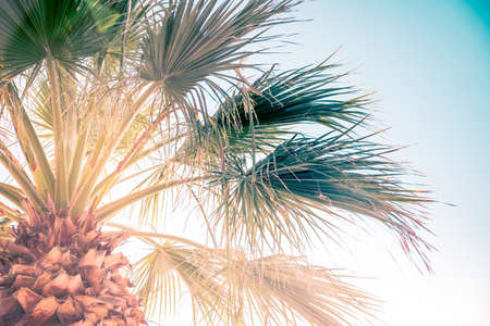 Upward view of a palm tree under the summer sun light. Stockfoto