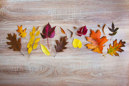 Top view of various colorful autumn leaves over wooden background. Copy space. Zdjęcie Seryjne